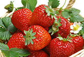 Sinorock Will Organize Picking Strawberries Activity